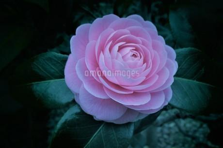 春の花々の写真素材 [FYI01260125]