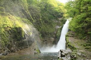 新緑の滝の写真素材 [FYI01260493]