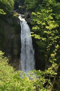 新緑の滝の写真素材 [FYI01260494]