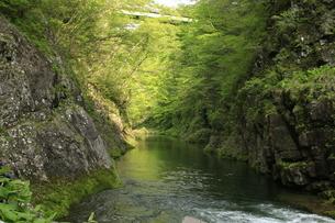 新緑の渓谷の写真素材 [FYI01260495]