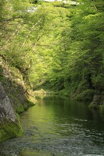 新緑の渓谷の写真素材 [FYI01260496]