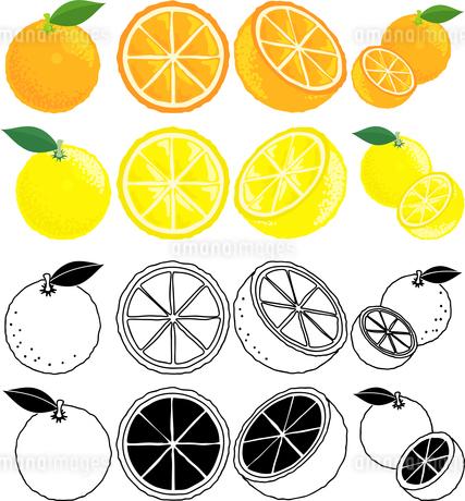 オレンジとグレープフルーツの可愛いアイコンのイラスト素材 [FYI01260506]