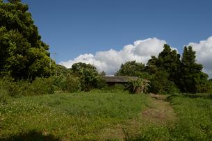 田舎の緑豊かな風景の写真素材 [FYI01260525]