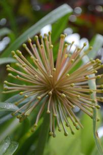 放射状に生える植物の写真素材 [FYI01260552]