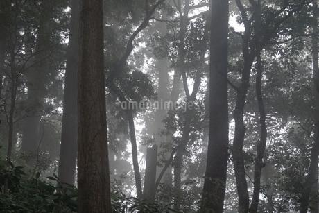 霧がかかる森の写真素材 [FYI01260626]