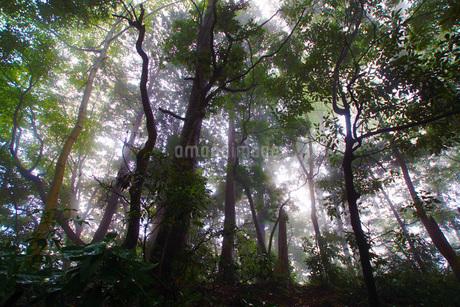 霧がかかる森の写真素材 [FYI01260629]