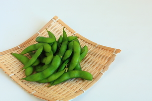 枝豆の写真素材 [FYI01260661]