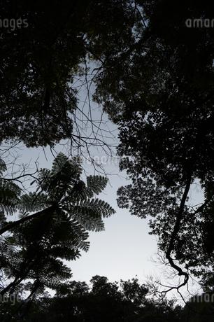 シルエットの南国の木々の写真素材 [FYI01260797]