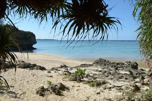 南国のビーチの写真素材 [FYI01260810]