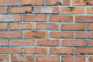レンガの壁の写真素材 [FYI01260812]