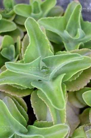 多肉植物の写真素材 [FYI01260813]