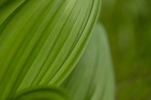 葉のクローズアップの写真素材 [FYI01260832]