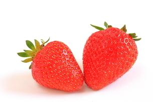 苺 フルーツ 白背景の写真素材 [FYI01260942]