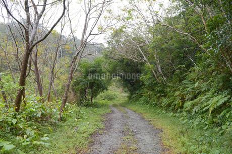 森の中の轍のある一本道の写真素材 [FYI01260981]