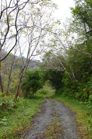 森の中の轍のある一本道の写真素材 [FYI01260982]