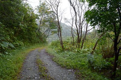 森の中の轍のある一本道の写真素材 [FYI01260983]