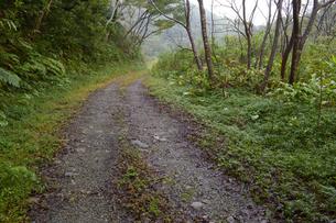 森の中の轍のある一本道の写真素材 [FYI01260984]