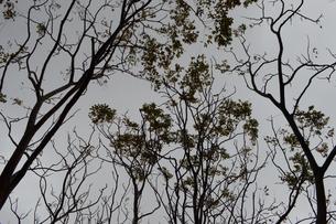 シルエットの木々の写真素材 [FYI01260985]