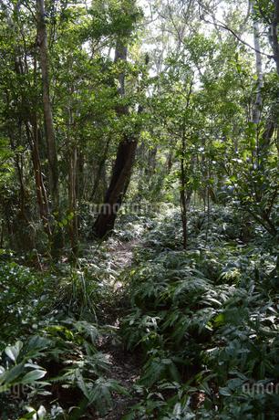 ジャングルの中の道の写真素材 [FYI01260991]