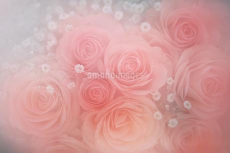 ピンク色の薔薇の花束の写真素材 [FYI01261011]