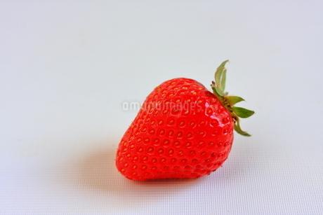 苺 ストロベリー 一粒の写真素材 [FYI01261108]