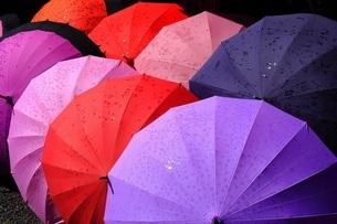 傘 梅雨の必需品の写真素材 [FYI01261119]