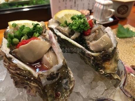 牡蠣の写真素材 [FYI01261137]