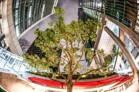 ビジネス街の中心にそびえ立つ大木の写真素材 [FYI01261256]