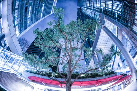 ビジネス街の中心にそびえ立つ大木の写真素材 [FYI01261257]