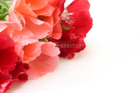 イロマツヨイグサの花束の写真素材 [FYI01261315]