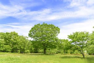 春 爽やかな新緑の写真素材 [FYI01261614]