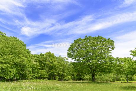 春 爽やかな新緑の写真素材 [FYI01261615]