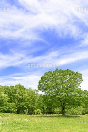 春 爽やかな新緑の写真素材 [FYI01261616]