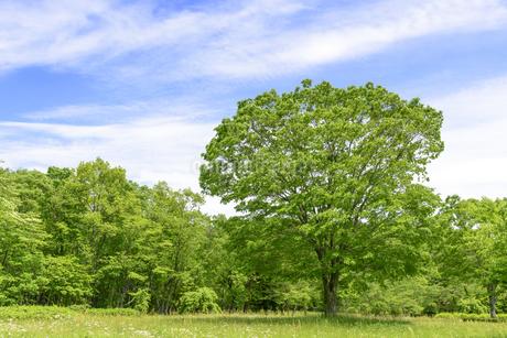 春 爽やかな新緑の写真素材 [FYI01261617]