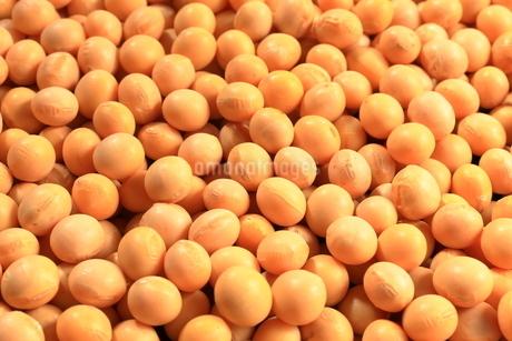 大豆の写真素材 [FYI01261647]