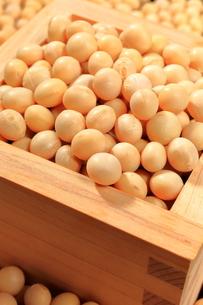 大豆の写真素材 [FYI01261650]