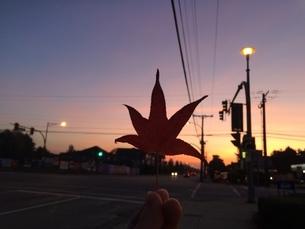 Mapleの写真素材 [FYI01261703]