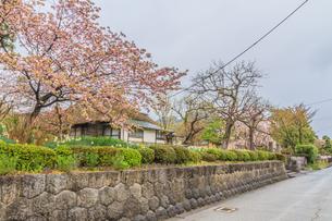 春の上山の武家屋敷通りの風景の写真素材 [FYI01261720]