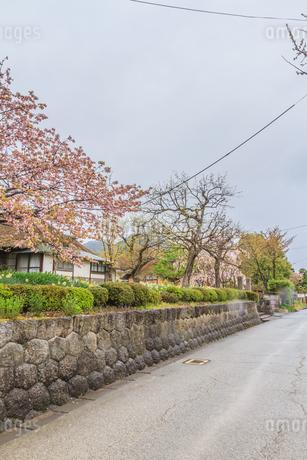 春の上山の武家屋敷通りの風景の写真素材 [FYI01261721]