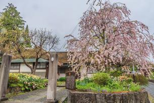 春の上山の武家屋敷の風景の写真素材 [FYI01261722]