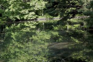 将軍池の写真素材 [FYI01261756]