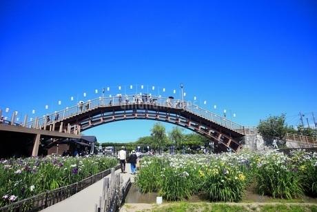 あやめまつり 茨城県潮来市の写真素材 [FYI01261880]