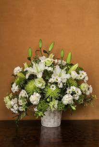 様々な白い花の写真素材 [FYI01261896]