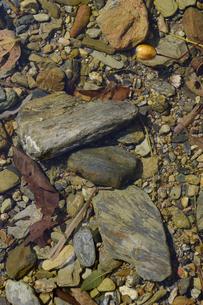 透明度の高い川底の石の写真素材 [FYI01261938]
