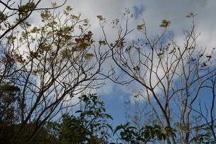 細い枝の木が空に向かって伸びているの写真素材 [FYI01261939]