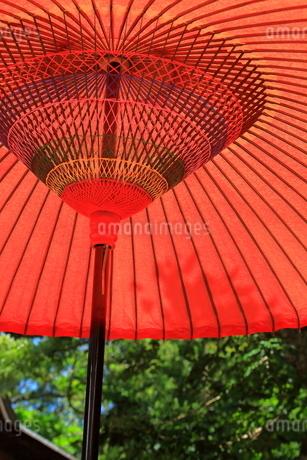 野点 和傘の写真素材 [FYI01261953]