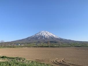 羊蹄山の写真素材 [FYI01261967]