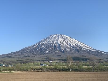 羊蹄山の写真素材 [FYI01261978]