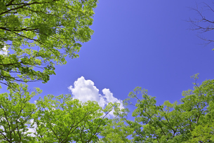 杜の都 仙台 西公園より新緑を愛でるの写真素材 [FYI01261985]