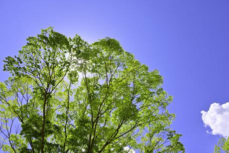 杜の都 仙台 西公園より新緑を愛でるの写真素材 [FYI01261989]